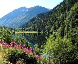 Alaska Crucero y Tour por Tierra