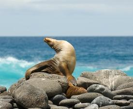 croisières aux Galapagos