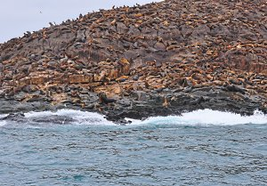 Sea Lions in Palomino Islands