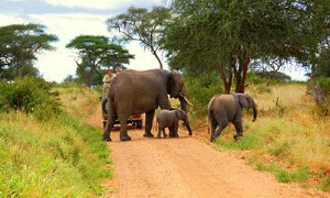 Jeep and Elephants