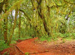 Kilimanjaro Path