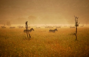 The Great Migration at Sunrise