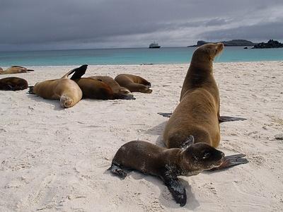 Espanola, Galapagos Islands, Ecuador