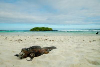 Santa Cruz, Galapagos Islands, Ecuador
