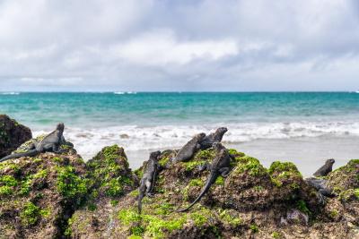 Isabela, Galapagos Islands, Ecuador