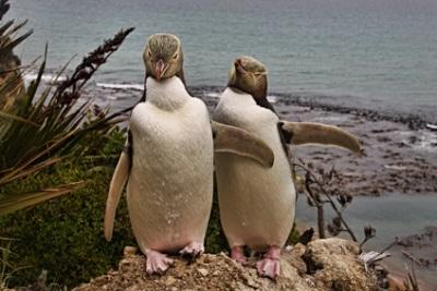 Antipodes Island, New Zealand