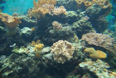 Ghizo Island, Solomons