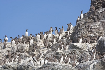 Semidi Islands, AK