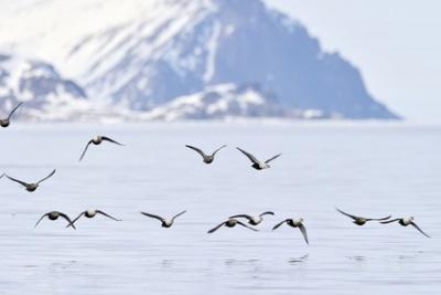 Baie de Cambridge, Nunavut, Canada