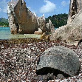 Ilha de Aldabra, Seichelles