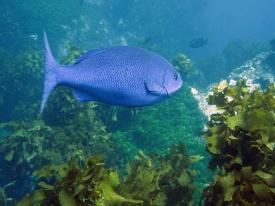 Beveridge Reef, Niue, Territorio de Nueva Zelanda
