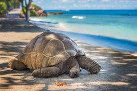 Aride, Seychelles