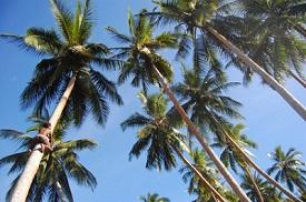 Isla Tuam, Papúa Nueva Guinea