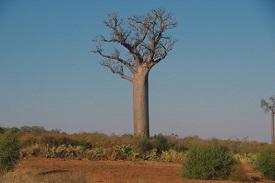 Tulear, Madagascar