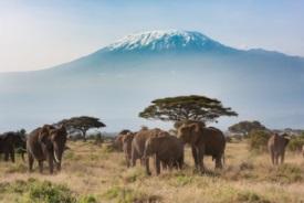 Kilimanjaro, Tanzânia