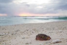 Isla Lady Elliot, Australia