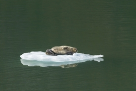 Icy Arm Fjord, Canadá