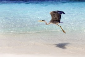 Wistari Reef, Australia