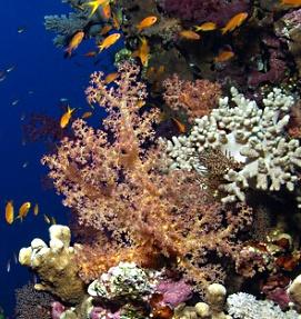 Arrecife, Islas Canarias