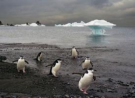 Ilha Meia Lua, Antártica