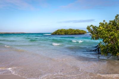 Black Turtle Cove, Santa Cruz, Galapagos Islands