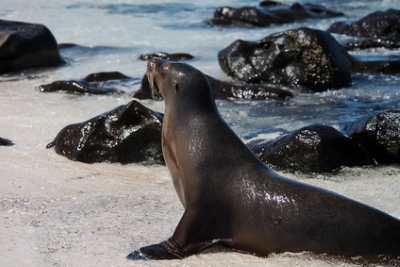 Mosquera Islet, Galapagos Islands, Ecuador