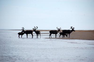 Ayon Island, Russia