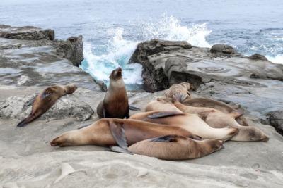 Sea Lion Island, Islas Malvinas
